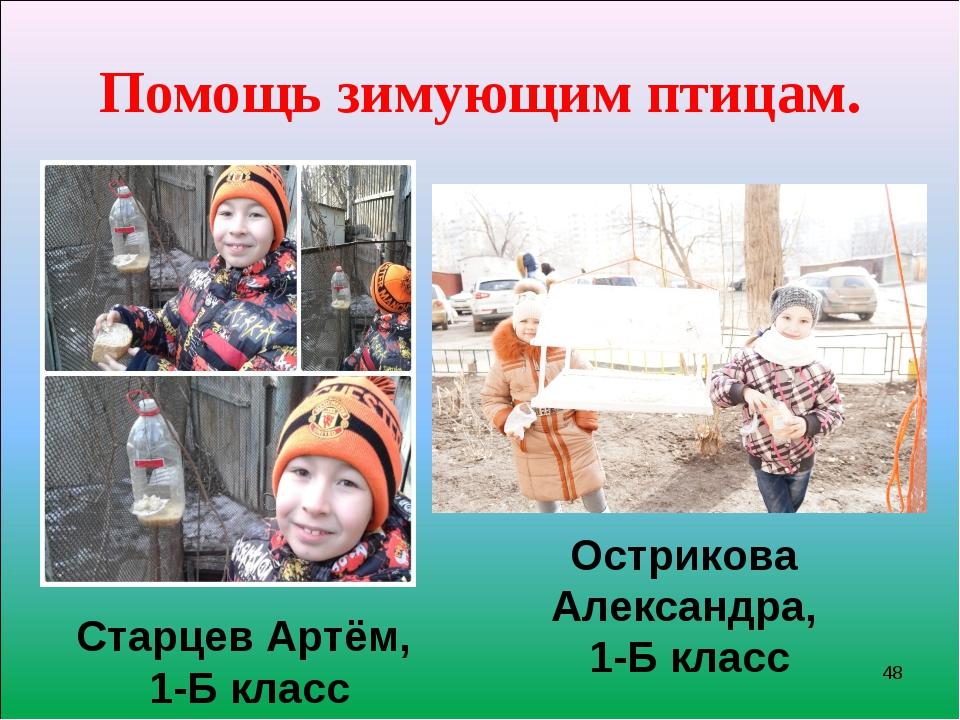 Помощь зимующим птицам. * Старцев Артём, 1-Б класс Острикова Александра, 1-Б...