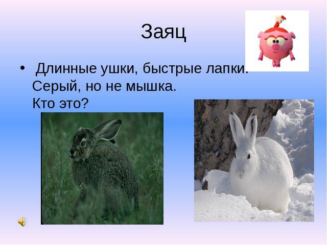 Заяц Длинные ушки, быстрые лапки. Серый, но не мышка. Кто это?