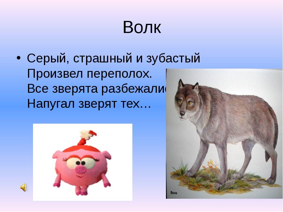 Волк Серый, страшный и зубастый Произвел переполох. Все зверята разбежались...