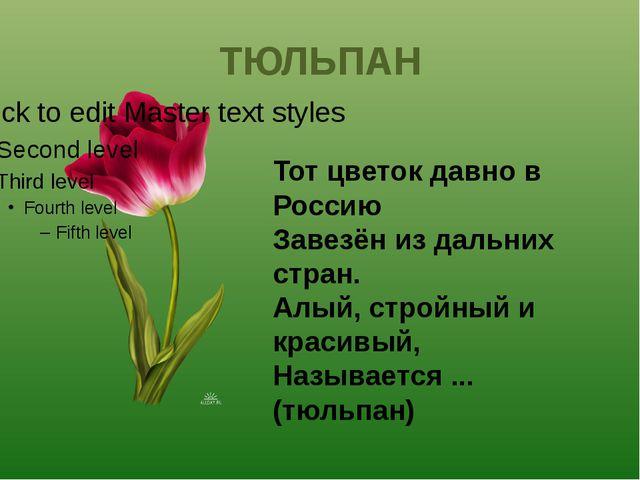 Тот цветок давно в Россию Завезён из дальних стран. Алый, стройный и красивый...