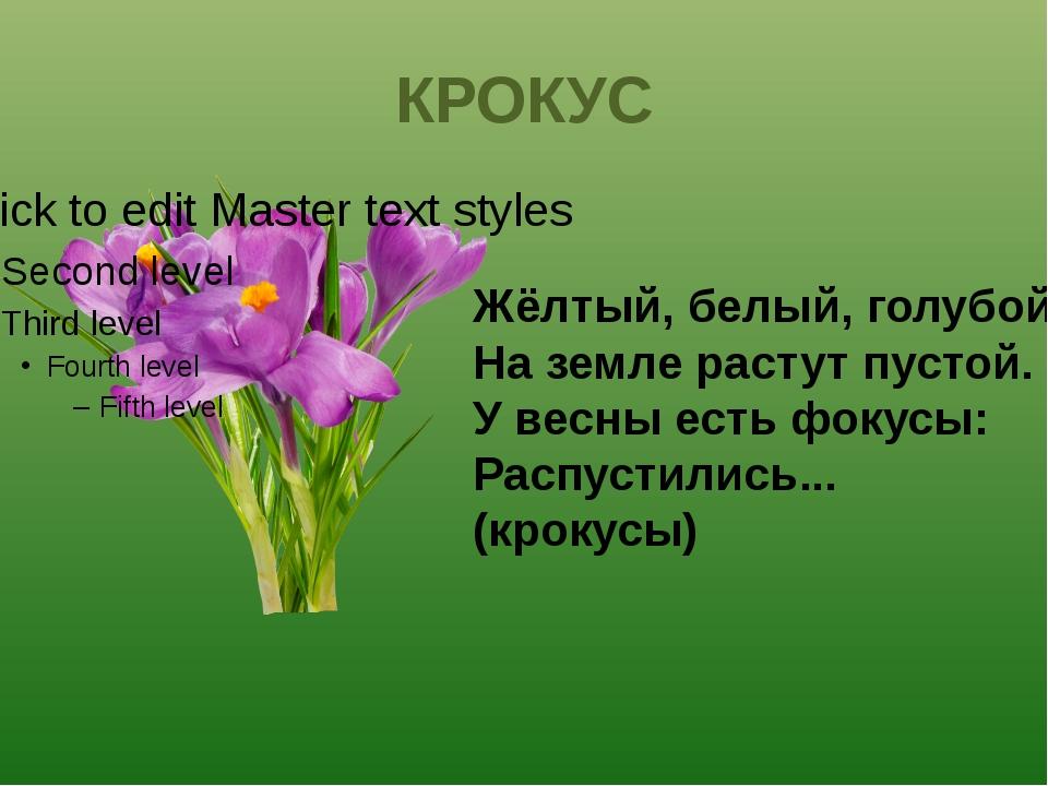 Жёлтый, белый, голубой; На земле растут пустой. У весны есть фокусы: Распусти...
