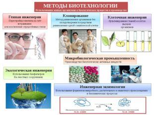 МЕТОДЫ БИОТЕХНОЛОГИИ Использование живых организмов и биологических процессов