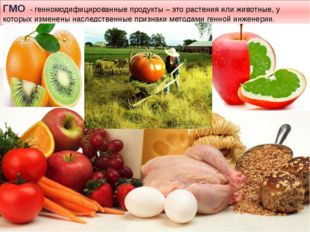 ГМО - генномодифицированные продукты – это растения или животные, у которых и
