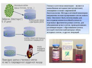 Генная и клеточная инженерия – являются важнейшими методами (инструментами),