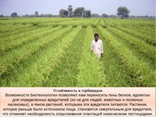 Устойчивость к гербицидам Возможности биотехнологии позволяют нам переносить