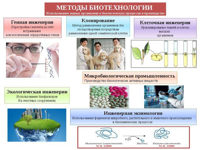 МЕТОДЫ БИОТЕХНОЛОГИИ Использование живых организмов и биологических процессов...