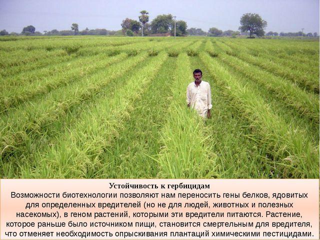 Устойчивость к гербицидам Возможности биотехнологии позволяют нам переносить...