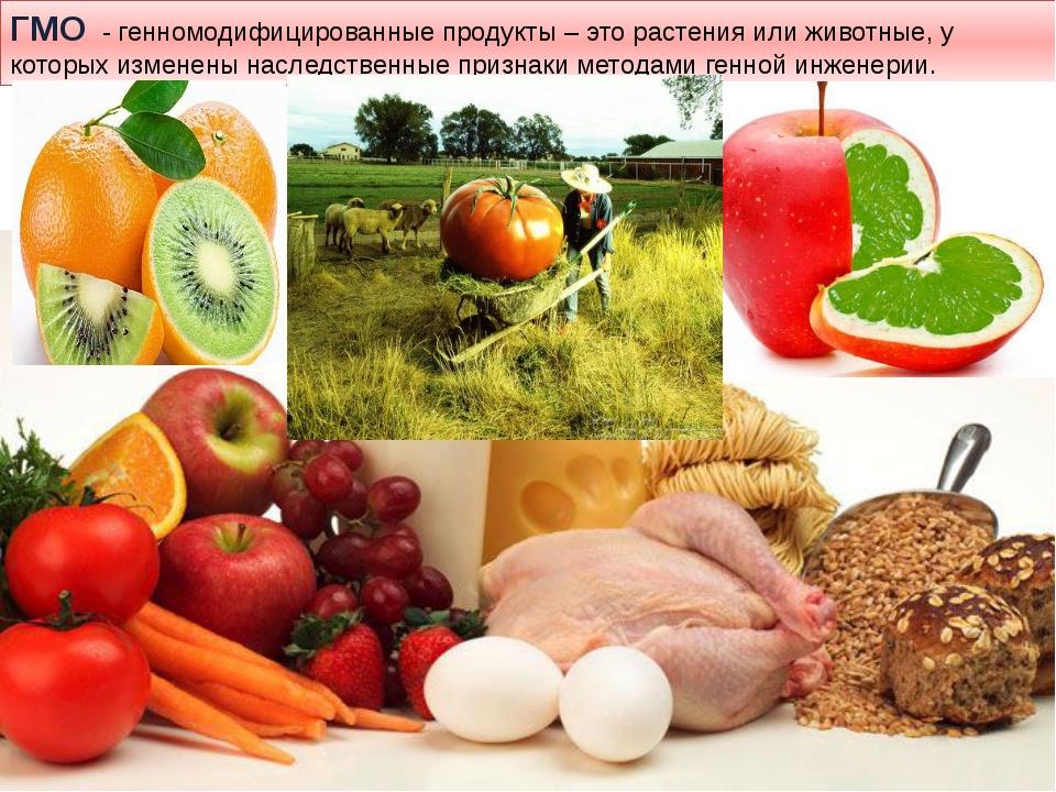 ГМО - генномодифицированные продукты – это растения или животные, у которых и...