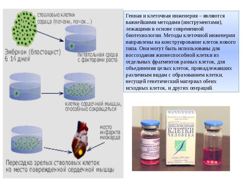 Генная и клеточная инженерия – являются важнейшими методами (инструментами),...