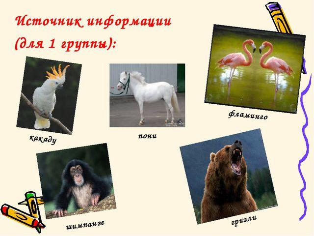 Источник информации (для 1 группы): гризли шимпанзе какаду фламинго пони