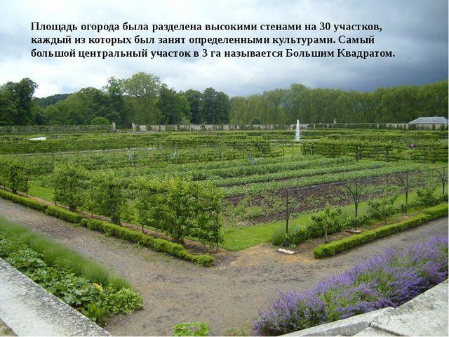 Площадь огорода была разделена высокими стенами на 30 участков, каждый из кот...