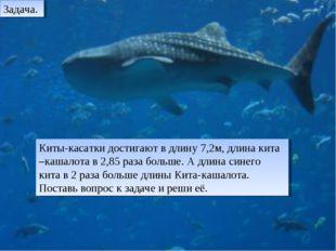 Киты-касатки достигают в длину 7,2м, длина кита –кашалота в 2,85 раза больше.