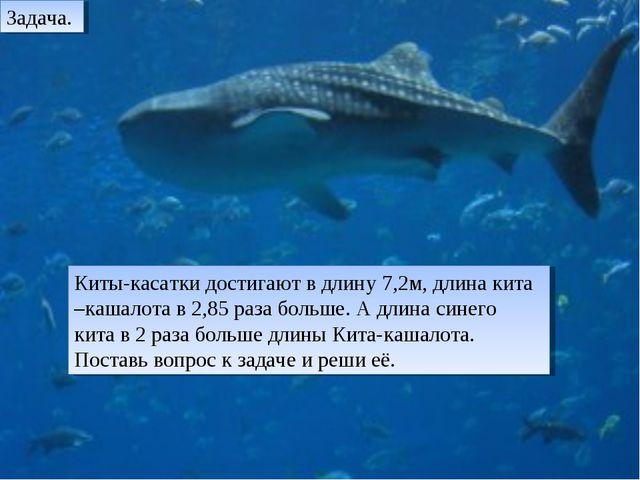 Киты-касатки достигают в длину 7,2м, длина кита –кашалота в 2,85 раза больше....