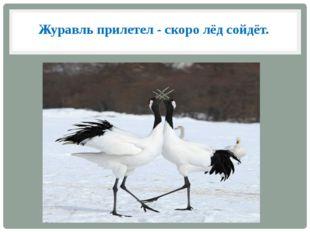 Журавль прилетел - скоро лёд сойдёт.