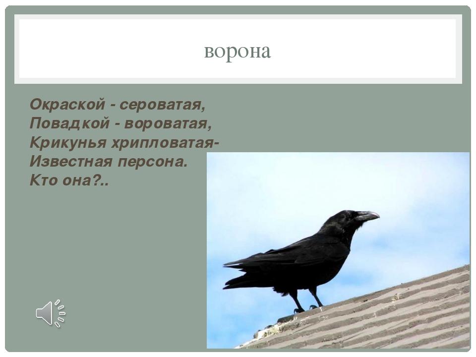 ворона Окраской - сероватая, Повадкой - вороватая, Крикунья хрипловатая- Изве...