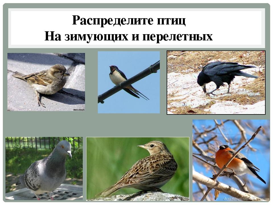 Распределите птиц На зимующих и перелетных