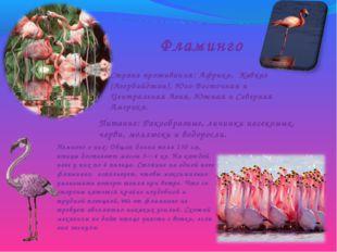 Фламинго Страна проживания: Африка, Кавказ (Азербайджан), Юго-Восточная и Цен