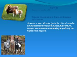 пони Немного о них: Мелкие (рост до 150 см) лошади, отличаются большой выносл
