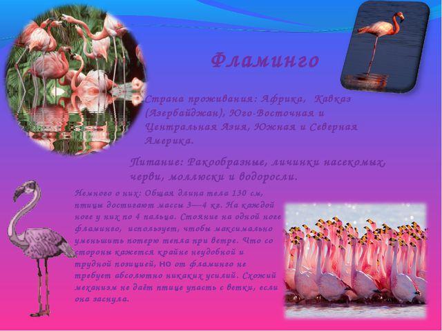 Фламинго Страна проживания: Африка, Кавказ (Азербайджан), Юго-Восточная и Цен...