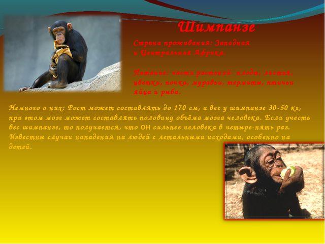 Шимпанзе Страна проживания: Западная и Центральная Африка. Питание: части рас...