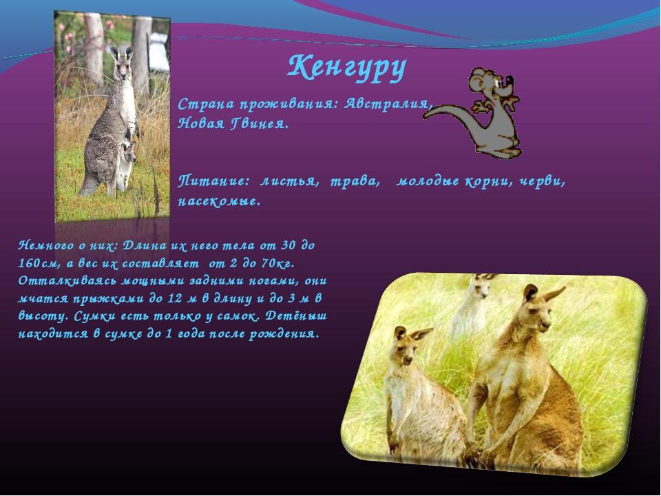 Кенгуру Страна проживания: Австралия, Новая Гвинея. Питание: листья, трава, м...