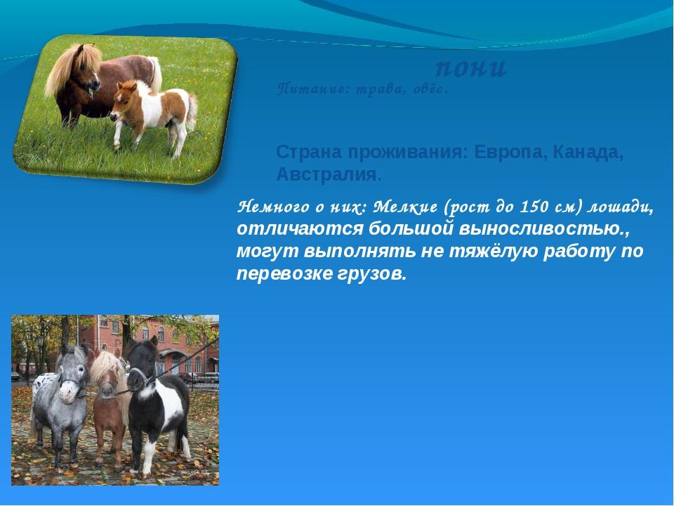пони Немного о них: Мелкие (рост до 150 см) лошади, отличаются большой выносл...