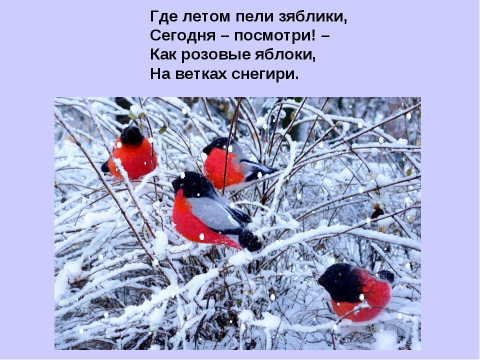 Где летом пели зяблики, Сегодня – посмотри! – Как розовые яблоки, На ветках с...