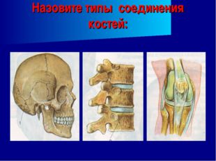 Назовите типы соединения костей: