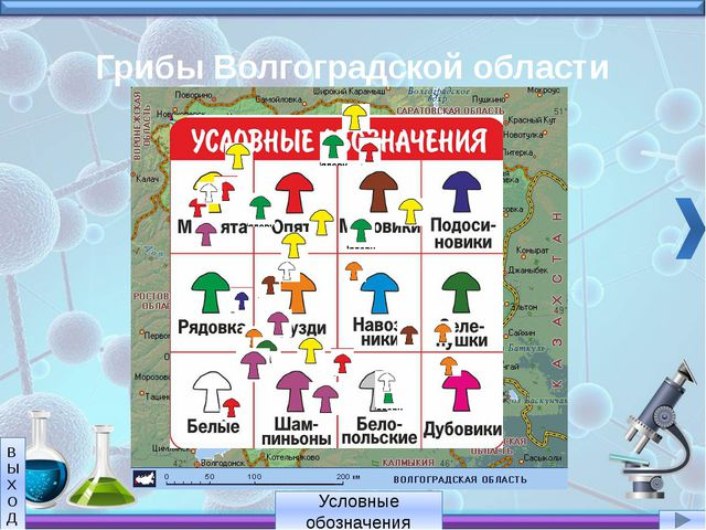 Грибы Волгоградской области Условные обозначения В Ы Х О Д