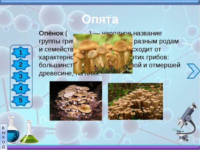 Белые грибы 1 2 3 4 5 Белый гриб считается царём грибов не только из-за его в...