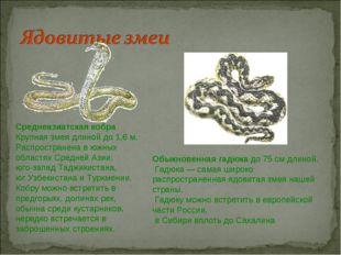 Среднеазиатская кобра Крупная змея длиной до 1,6 м. Распространена в южных об