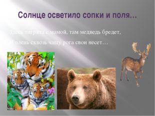 Солнце осветило сопки и поля… Здесь тигрята с мамой, там медведь бредет, И ол