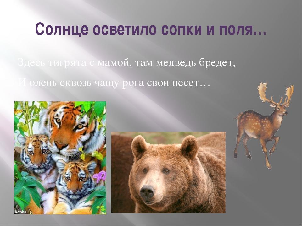 Солнце осветило сопки и поля… Здесь тигрята с мамой, там медведь бредет, И ол...