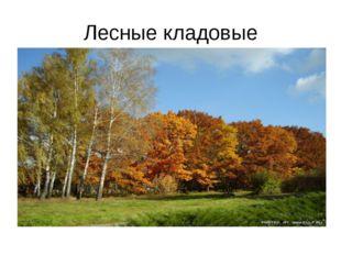 Лесные кладовые