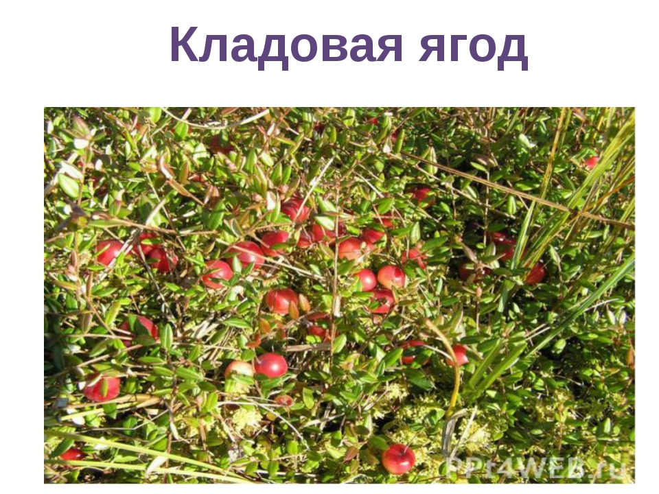 Кладовая ягод