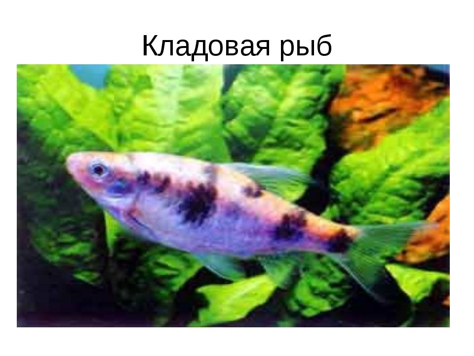 Кладовая рыб