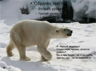 Я –белый медведь! Отчего мне, мишке, хочется реветь? Вы в нас люди - не стре
