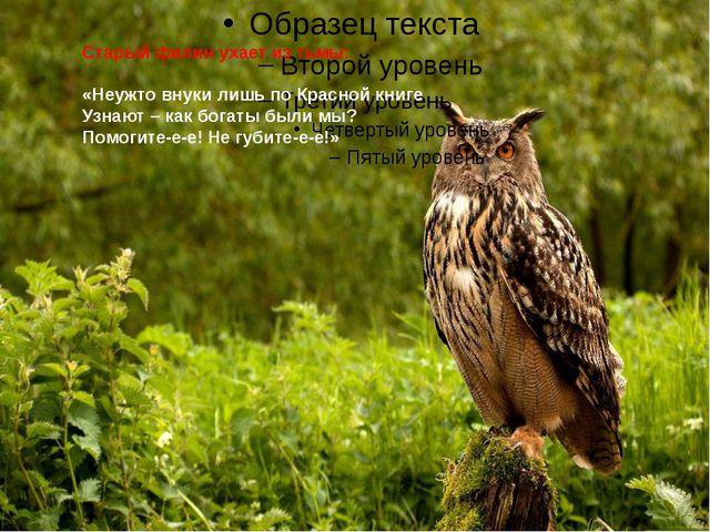 Старый филин ухает из тьмы: «Неужто внуки лишь по Красной книге Узнают – как...