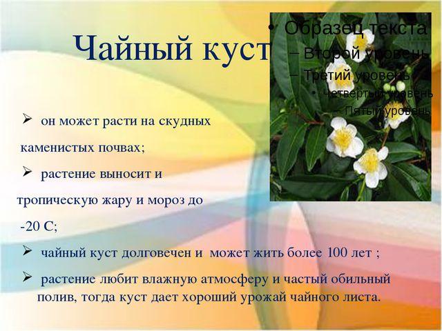 Чайный куст он может расти на скудных каменистых почвах; растение выносит и т...