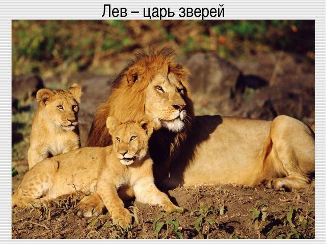 Лев – царь зверей