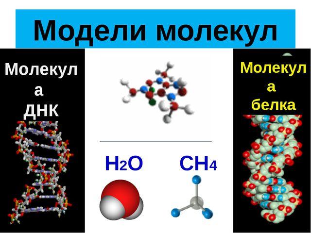 Модели молекул Молекула ДНК Молекула белка Н2О СН4