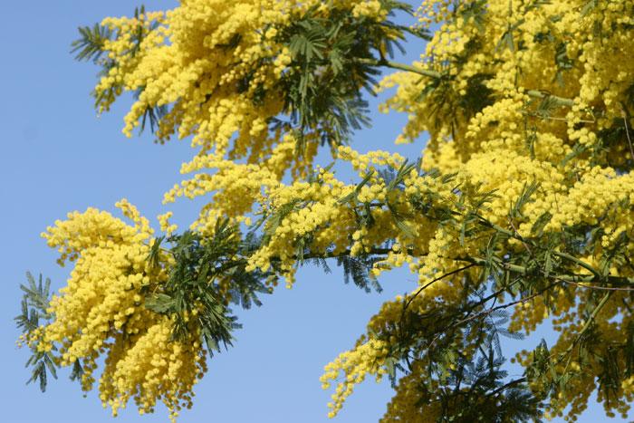 http://foto-cvety.narod.ru/images/flowers053.jpg