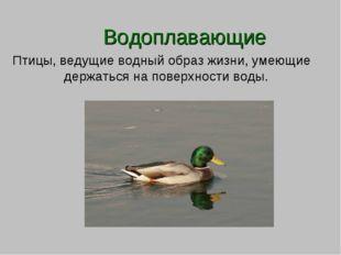 Водоплавающие Птицы, ведущие водный образ жизни, умеющие держаться на поверх
