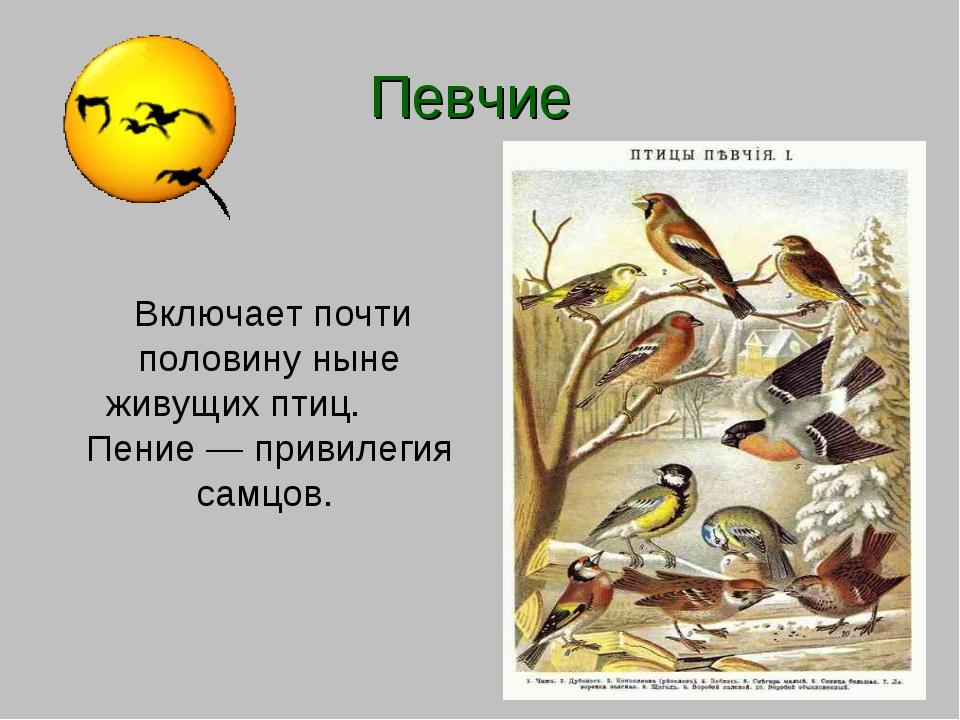 Певчие Включает почти половину ныне живущих птиц. Пение— привилегия самцов.