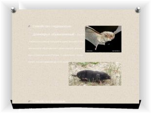 Семейство гладконосые- Длинокрыл обыкновенный - На юге Хасанского района нах