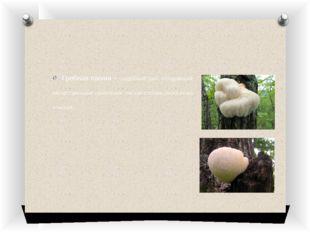 Грибная лапша – съедобный гриб, обладающий лекарственными свойствами. Низкая