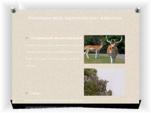 Некоторые виды парнокопытных животных Уссурийский пятнистый олень – Подвид со