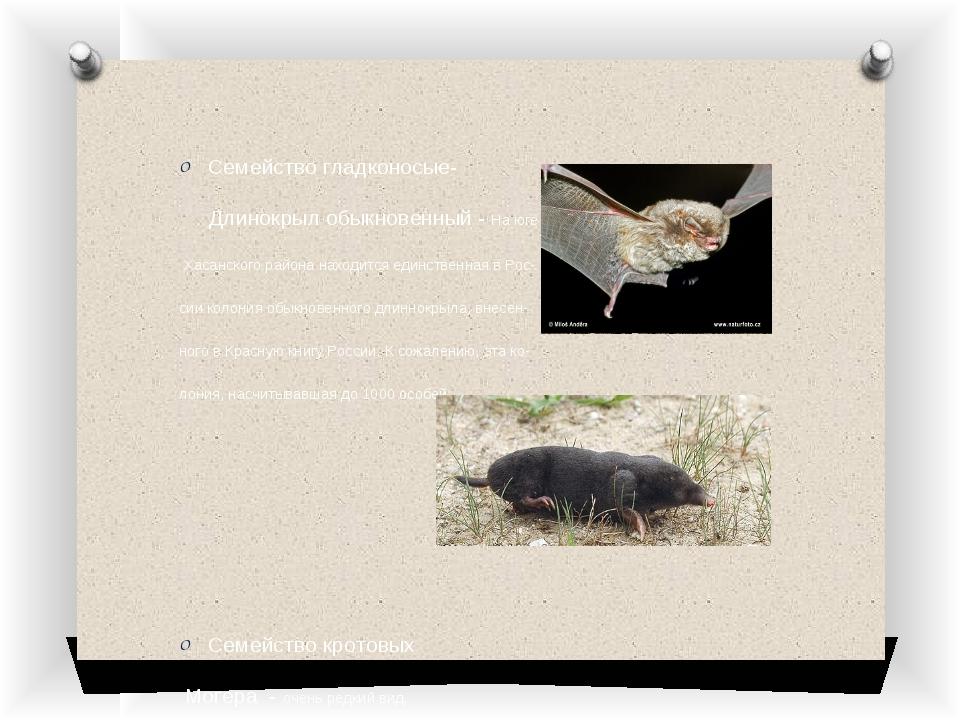 Семейство гладконосые- Длинокрыл обыкновенный - На юге Хасанского района нах...
