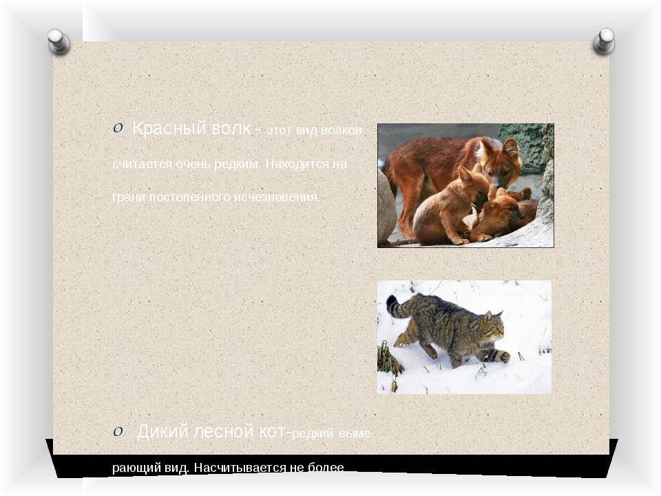 Красный волк - этот вид волков считается очень редким. Находится на грани пос...