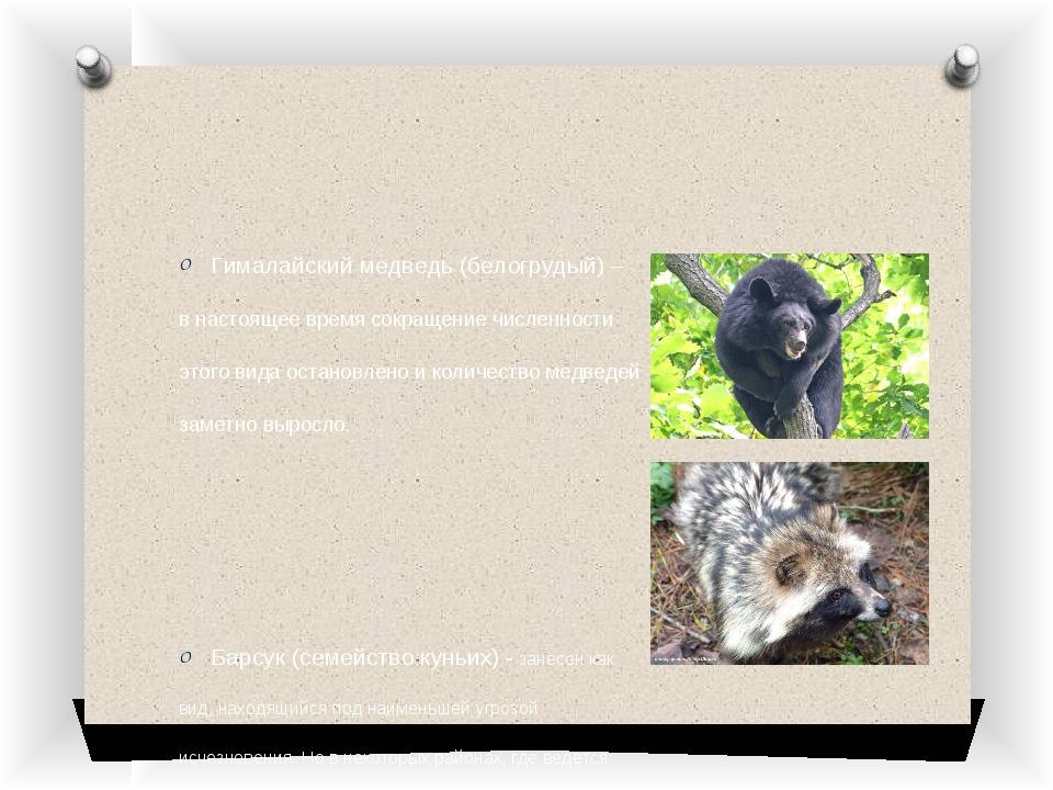 Гималайский медведь (белогрудый) – в настоящее время сокращение численности э...